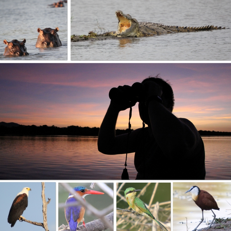 Kariba collage