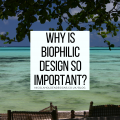 Why Is Biophilic Design So Important