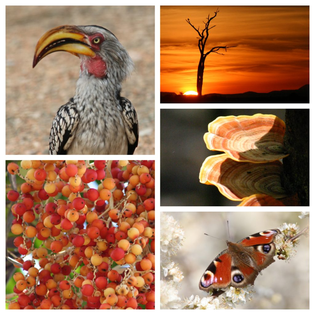 Bright oranges scenes from nature - hornbill bird, berries, sunset, mushrooms and a butterfly.